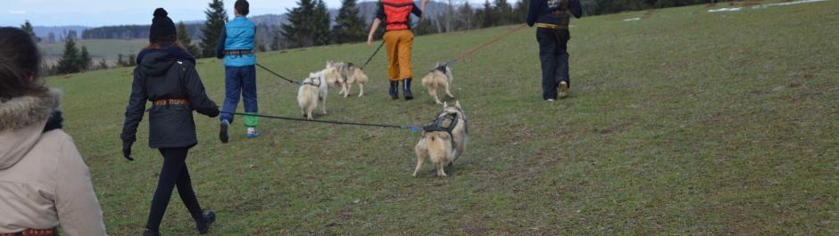 cani rando dans le Doubs