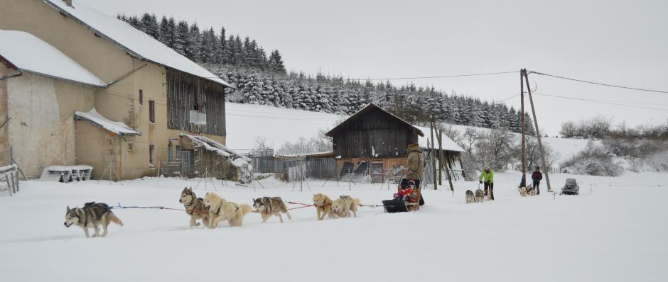 Attelages de chiens de traineau Les Nordiques de la Ferme sur la Roche