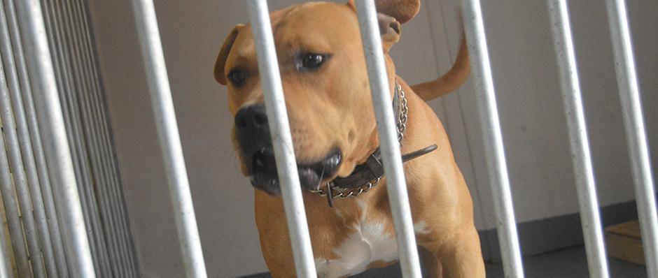 pension canine Belleherbe chien catégorisé