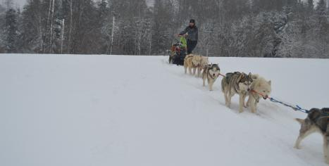 balade en chiens de traineau Belleherbe Les Nordiques de la Ferme sur la Roche