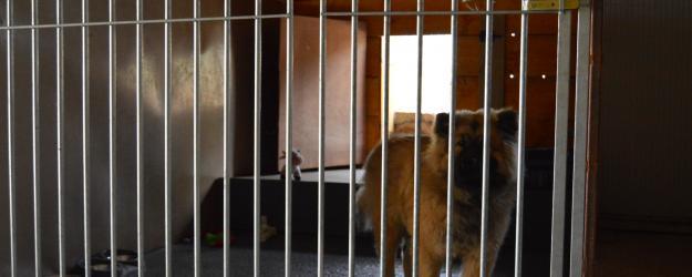 chien en pension, pension canine située dans le Doubs entre Besançon Pontarlier et Montbéliard