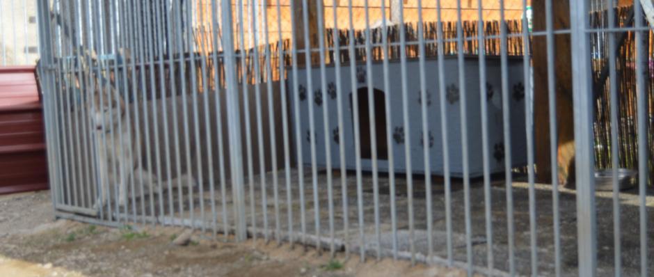 box extérieur pension canine de la ferme sur la roche 25380 Belleherbe