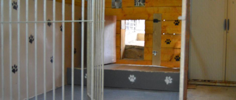 box intérieur, box pension canine Ferme sur la Roche Belleherbe