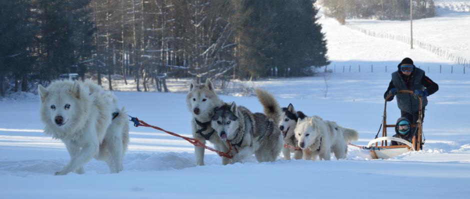 initiation chiens de traineau, balade chiens de traineau, Doubs Jura